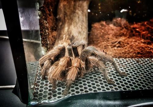 Паланга: Инсектариум: А вы боитесь жучков-паучков?