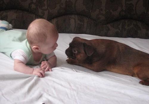 Вы подпускаете домашних животных к малышу?