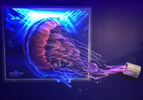 В погоне за летом: музей живых медуз в Киеве