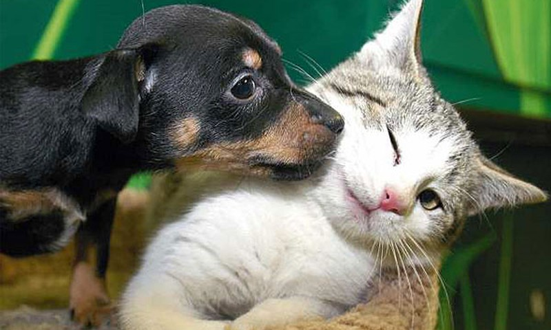 Собака или кошка кто, ваш фаворит?