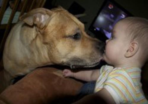 Животное и малыш: за и против