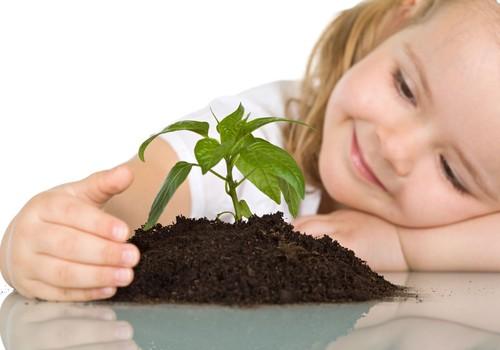 Сад на подоконнике: как помочь маленькому садоводу