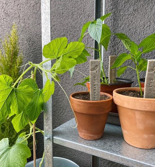 Что выращивать? Три инстаграм-блогера делятся своим опытом садоводства на подоконнике
