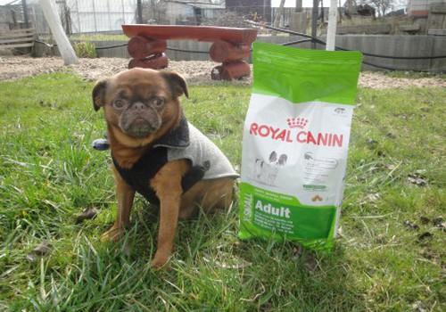 Добби предпочел Royal Canin