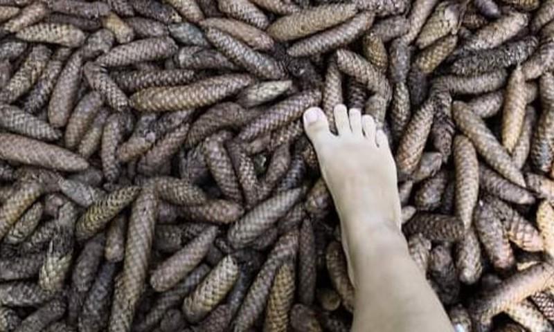 Босоногая тропа в Valguma Pasaule: приятная «пытка» для ног