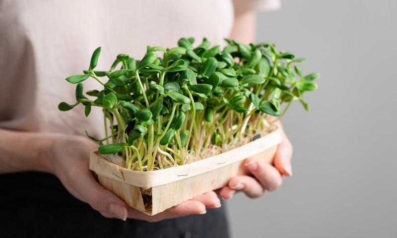 Проростки – кладезь ценных веществ для нашего организма