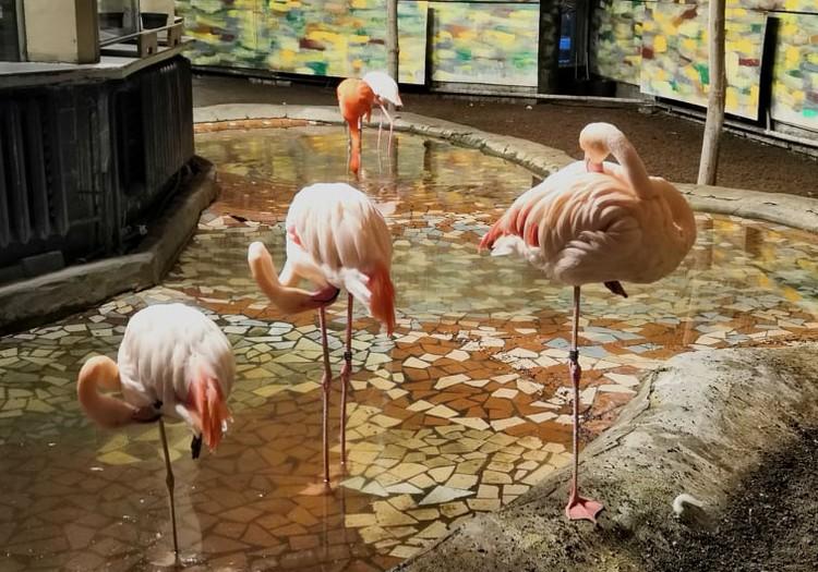 Зимние бродилки: вечера света в зоопарке