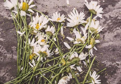 21 век: в Елгаве в родах на дому без медицинской помощи скончались мать и ребёнок