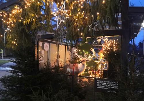 Зимние бродилки: «латвийская Швейцария» -  живописная Сигулда