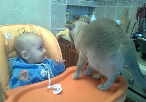 Как подготовить своего питомца к рождению малыша