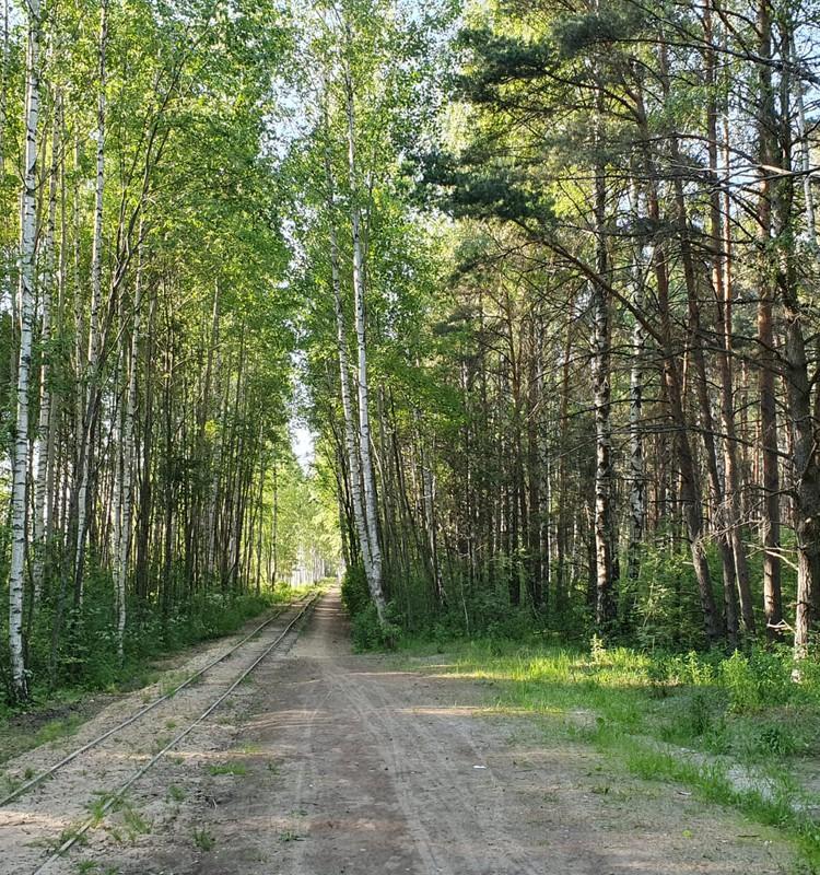 Прогулка летняя, болотно-лесная