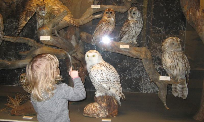 Музеи Риги, куда интересно сходить с ребёнком