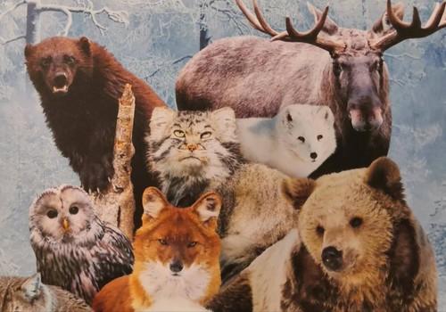 Снежная Лапландия: путешествие в Заполярье: Рануа парк и развлекательный комплекс «Эдем» в Оулу