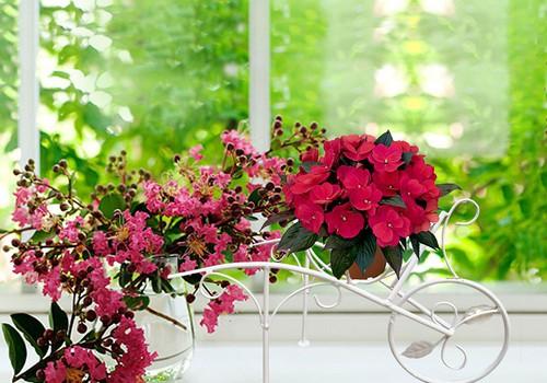 ПРОЕКТ ВЕСНА НА ПОДОКОННИКЕ: с растениями как с детьми