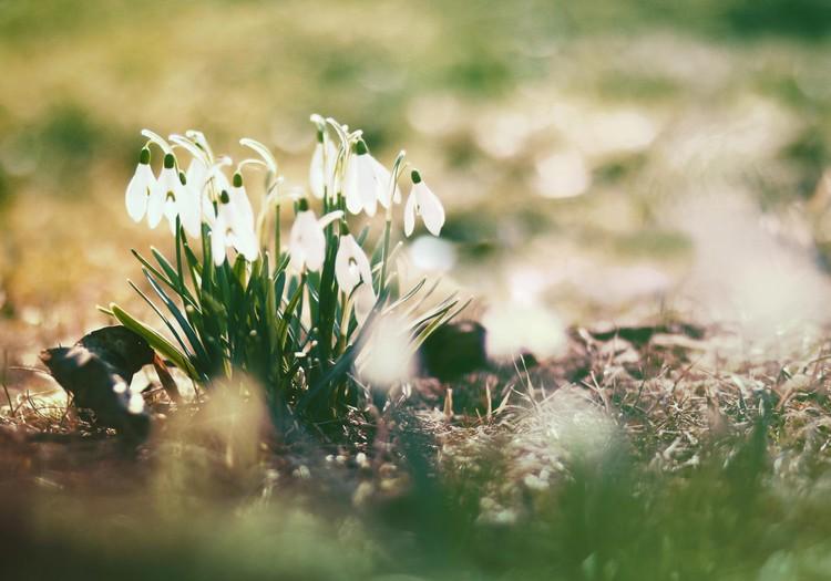 БЛОГ АЛЁНЫ: Первый день весны