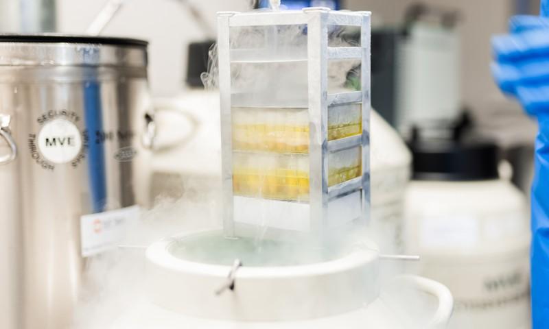 Стволовые клетки –для тех, кто думает про завтра