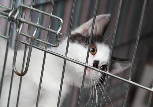 Приюты для животных ждут помощи от рижан