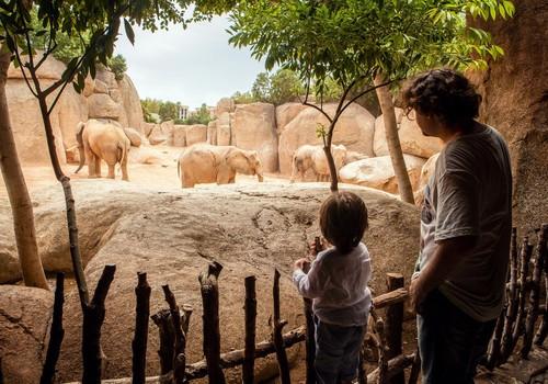 ДОШКОЛЬНИК ТИМОФЕЙ: «Не хочу кататься на слоне»