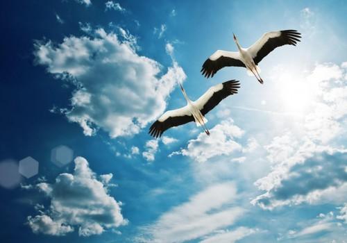 БЛОГ ЛЕНЫ: До свидания, и Здравствуй, Новый Путь!
