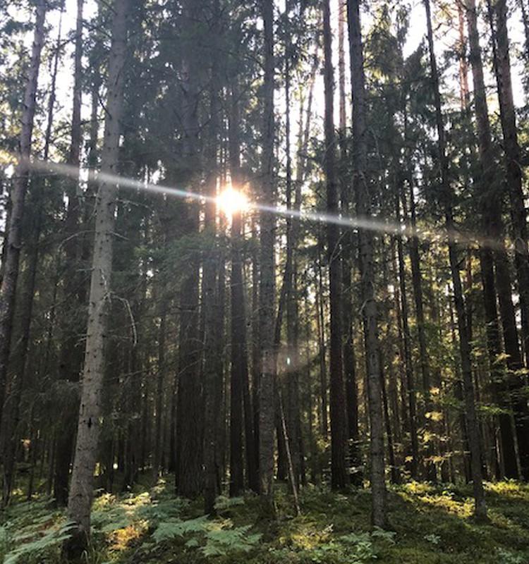 Природная тропа в Лигатне