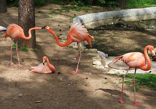 Приходите в зоопарк: расписание кормления животных