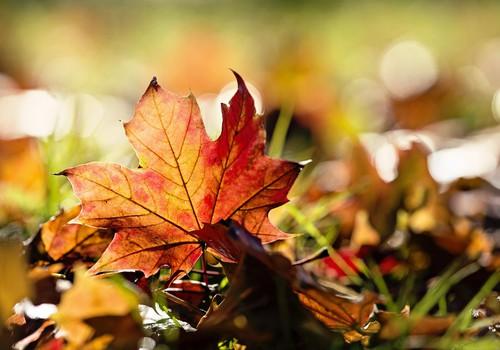 БЛОГ АЛЁНЫ: А за окном осень...