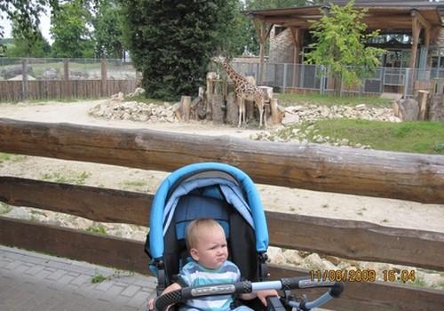 Как с пользой посетить зоопарк