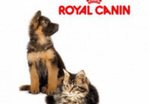 Побалуй своего любимца кормом Royal Canin