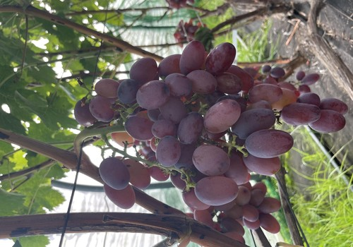 Осенний выходной и много винограда