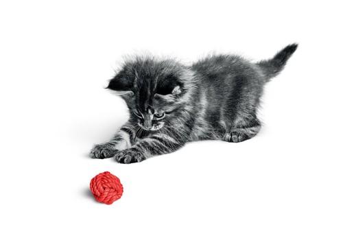 Вы любите кошек, но насколько хорошо вы их знаете?