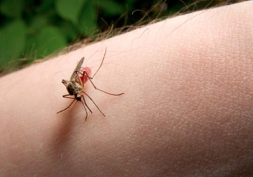 Защити семью, дом и домашних животных от насекомых