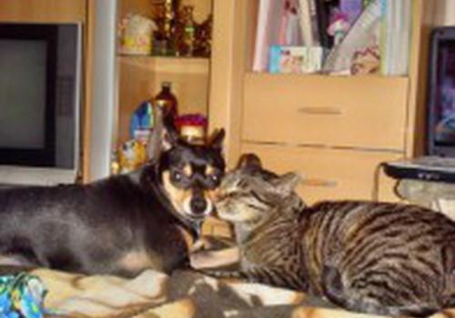 Пикет: защитники животных призывают не откладывать обязательное чипирование собак