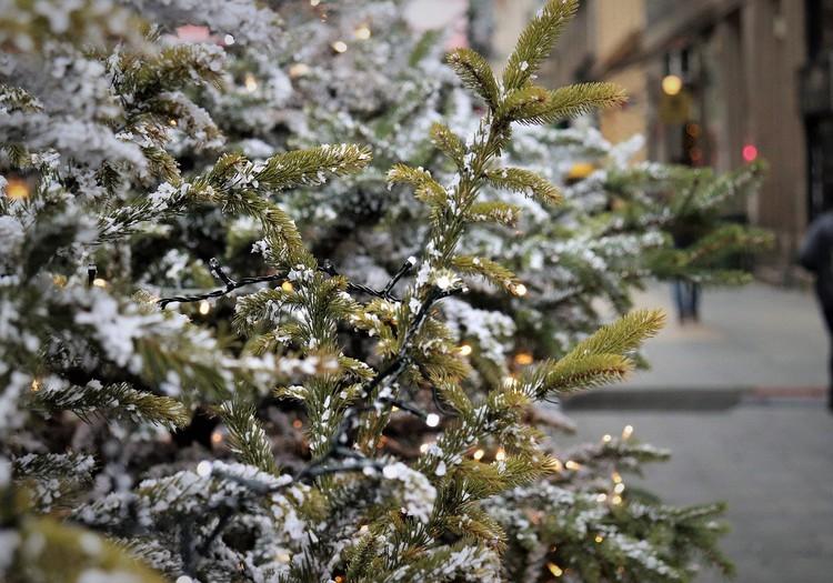 Сделай сам: зелёная ёлочка для зелёного Рождества