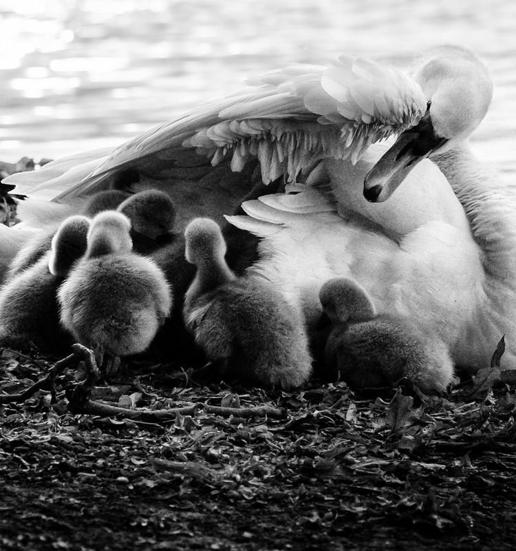 Алина: теперь мы - большая семья!