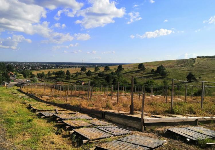 В погоне за летом: украинский Прованс – улиточная ферма «Jiffy»