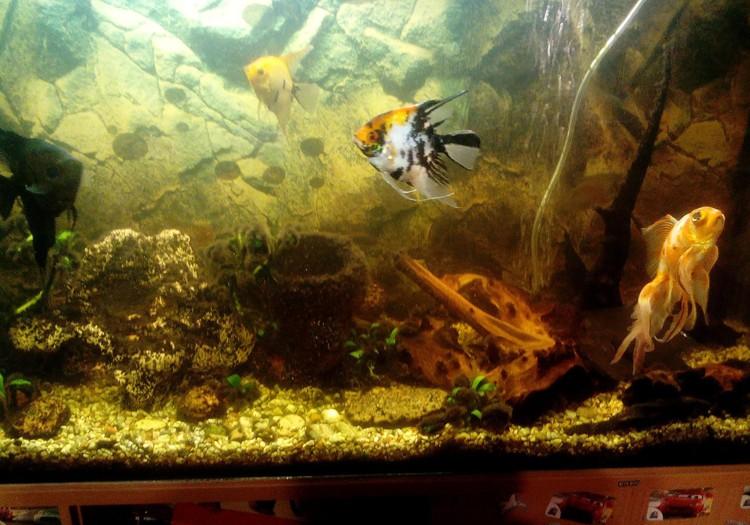 Тимур: Ну конечно же рыбы!