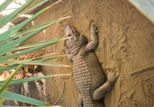 Гран Канария: Парк крокодилов