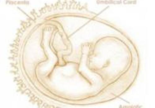 14-я неделя: можешь всем смело сообщать о своей беременности!