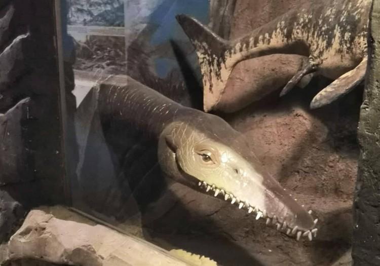 Латвийский музей природы: от доисторических времен до наших дней за три часа