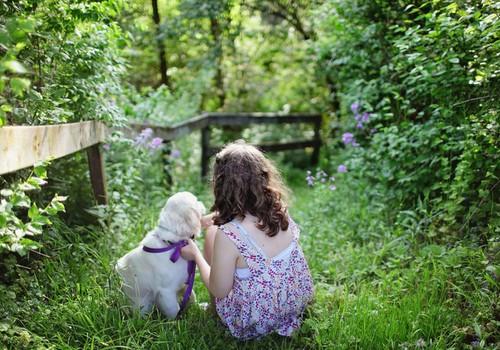 Летний гид: путешествуйте с домашними любимцами и выиграйте приз от Royal canin!