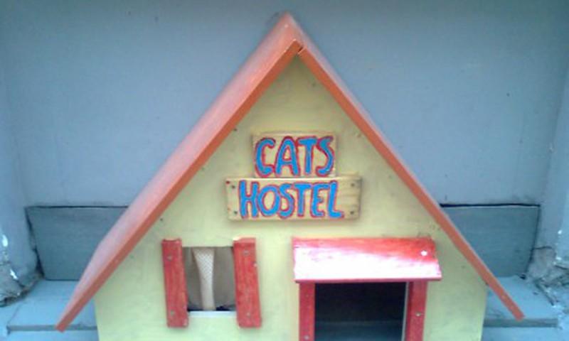 В Старой Риге появился CATS HOSTEL
