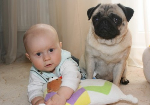 Если ребёнок мечтает о собаке