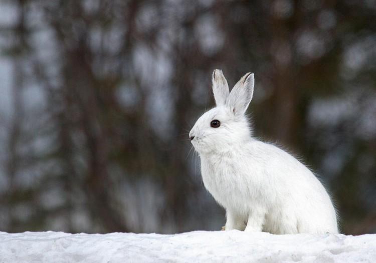 Сказка для детей: Как лес зиму ждал
