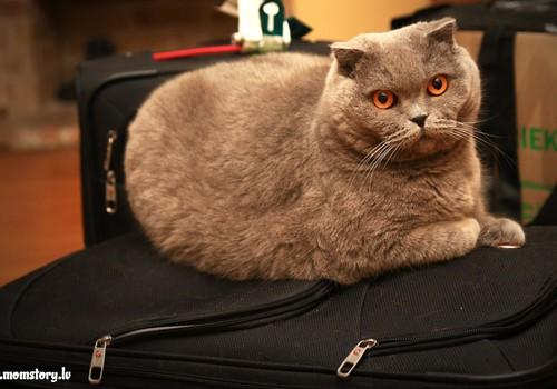 АЛИНА: Сидим на чемоданах