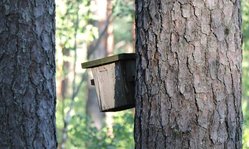 ЛЕТНИЙ ГИД: Нагельмуижский дуб и лесной трип Силакрогс-Закюмуижа, или полный абсурд