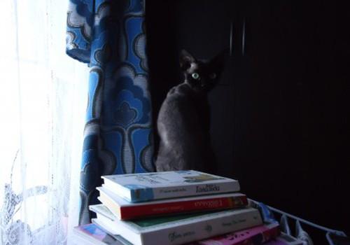Книга или е-книга?