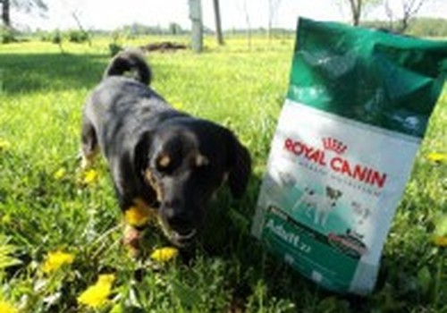 Royal Canin - самое лучшее для нашего любимца