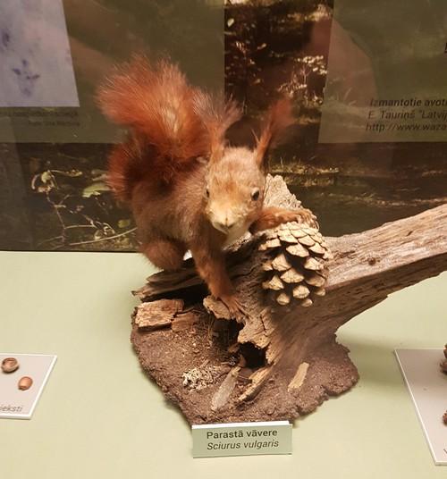 Латвийский музей природы - один из лучших музеев для всей семьи!