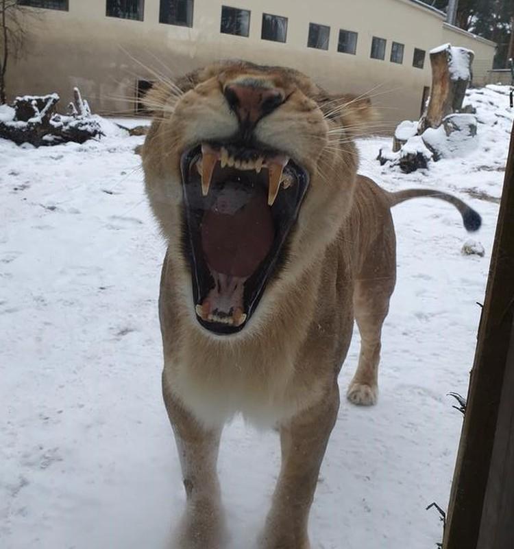 Зоопарк строгого режима