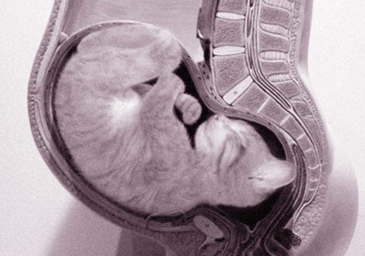 7 НЕДЕЛЬ: Дела кошачьи